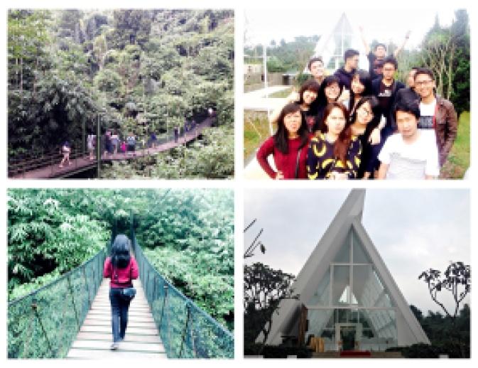 2 Greenforest collage