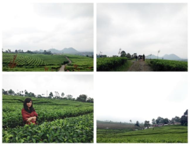 3 Tea Garden collage